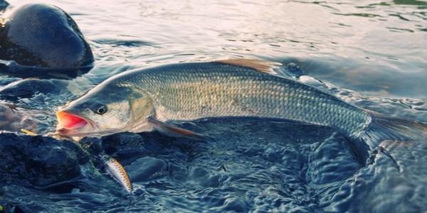 Летняя рыбалка на спиннинг